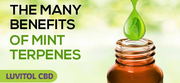 Peppermint Terpene Benefits in Luvitol Vanilla Mint CBD Tincture