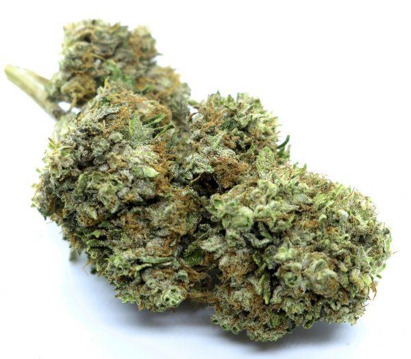 Organic CBG White